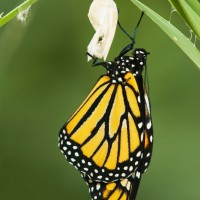The Butterfly Metaphor for Transformation