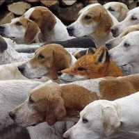 Fox or Hound? A Time to Stop Pretending